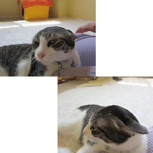 cats2_20130818125756171.jpg