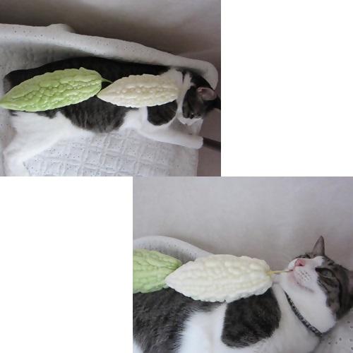 cats2_201308181342351c3.jpg