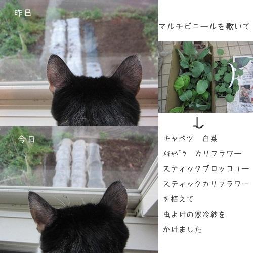 cats2_20130917185707707.jpg