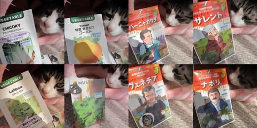 cats2_20130918224421e8e.jpg