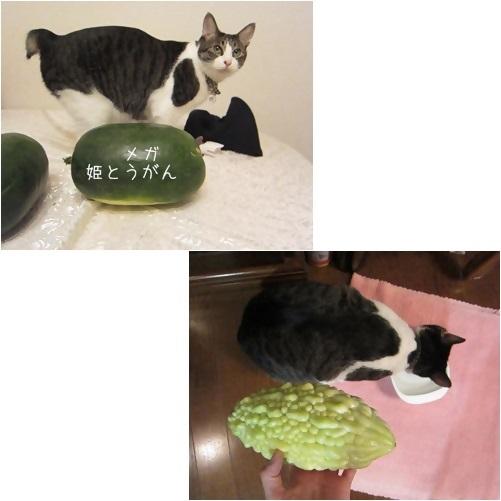 cats2_20131006010031132.jpg
