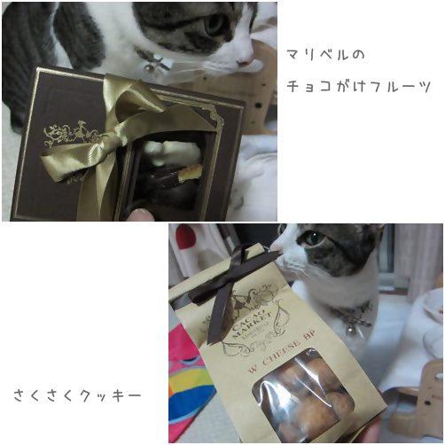 cats2_201310221513126a9.jpg