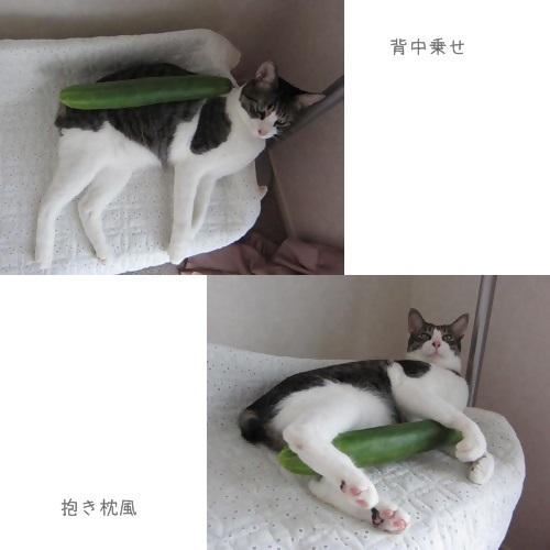 cats3_20130818134236277.jpg
