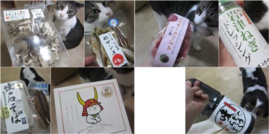cats3_20130927192301aa5.jpg