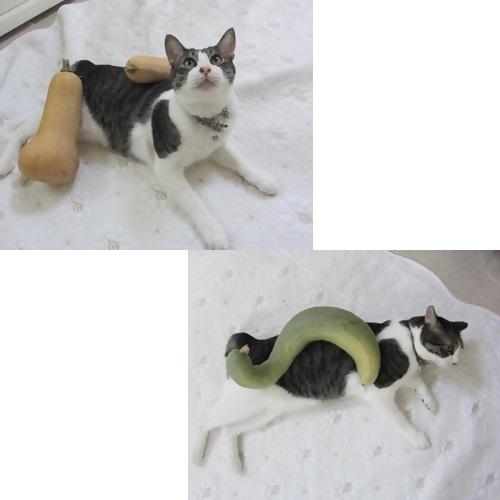 cats4_20130818134238ee7.jpg