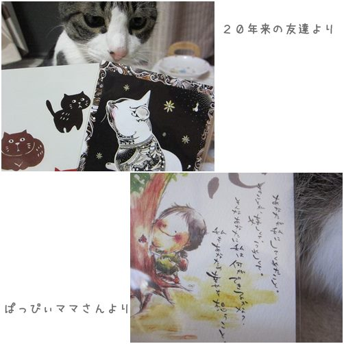 cats4_201310221513139f7.jpg