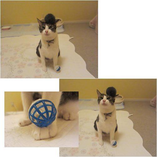 cats5_20130730013813.jpg