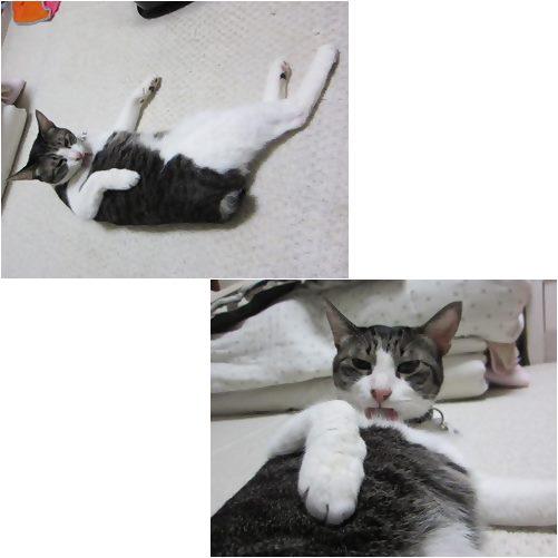 cats5_201309061922084d1.jpg