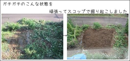 cats5_20130915144318a96.jpg