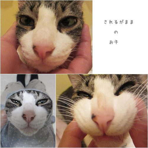 cats_20130717180204.jpg