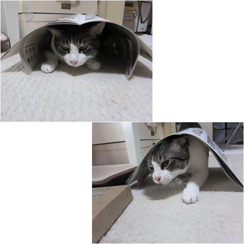 cats_20130718004138.jpg