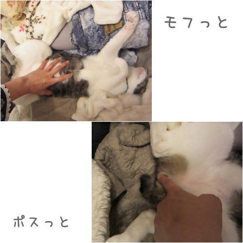 cats_20130718032229.jpg