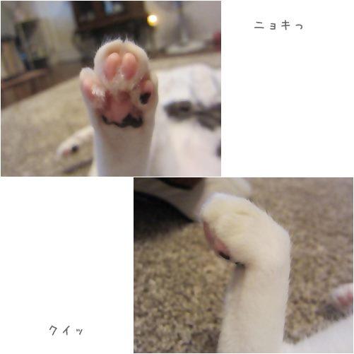 cats_20130718034807.jpg
