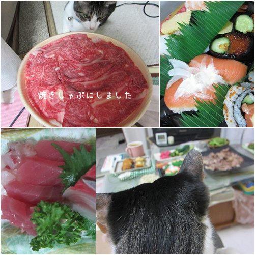 cats_20130719200944.jpg