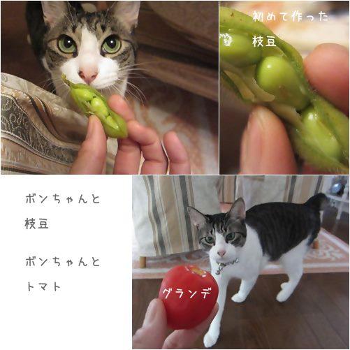 cats_20130723164818.jpg