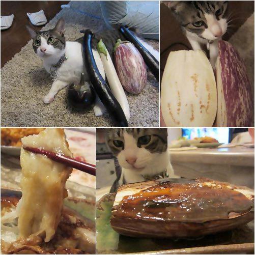 cats_20130730171624ced.jpg