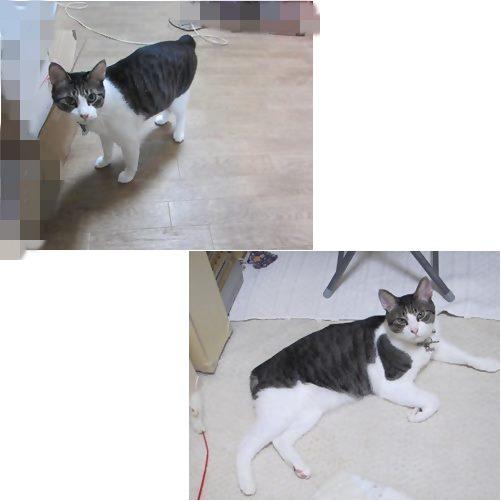 cats_2013080419121589e.jpg