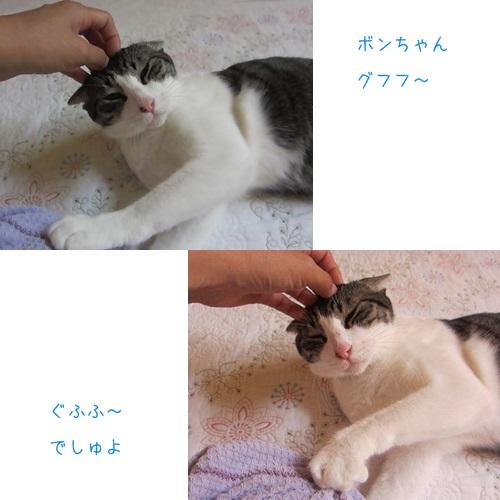 cats_20130815005626718.jpg