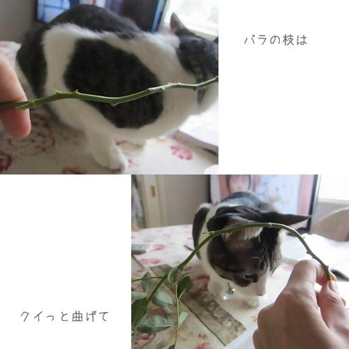 cats_20130817144123b69.jpg