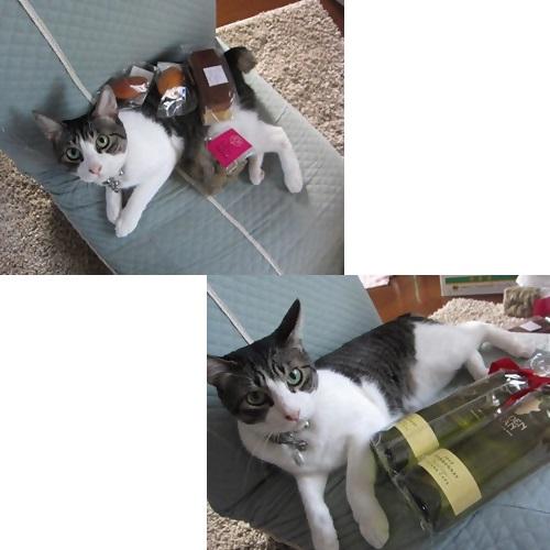 cats_20130819194233318.jpg