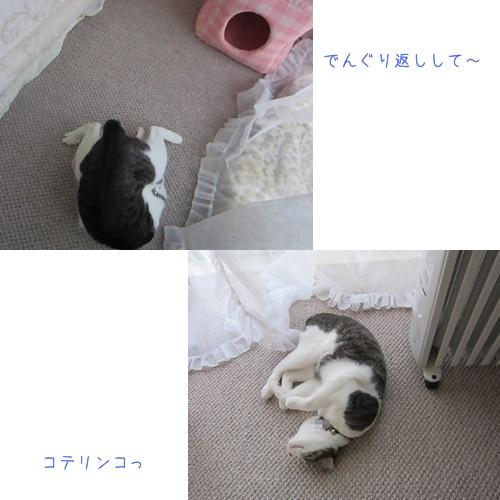 cats_20130823150651e04.jpg