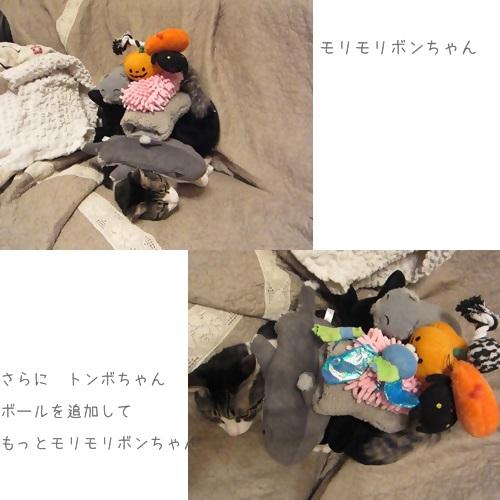 cats_20130824143836446.jpg