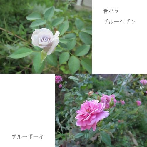 cats_20130825235610a23.jpg