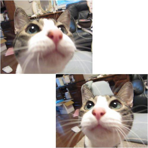cats_20130830174230549.jpg