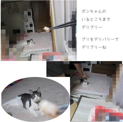 cats_20130902175229b.jpg
