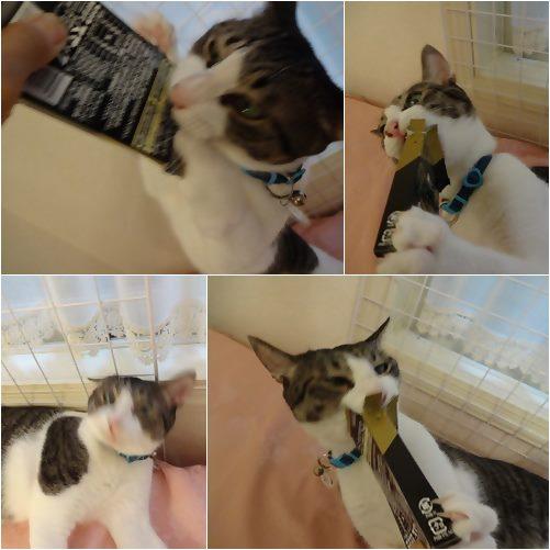 cats_201309041855178c7.jpg