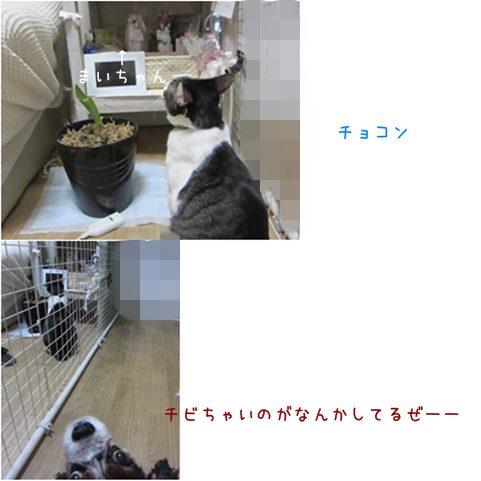 cats_20130904194615476.jpg
