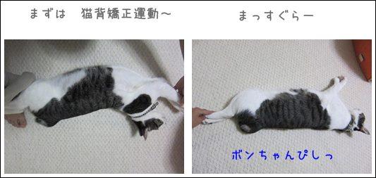 cats_20130906192206bcd.jpg