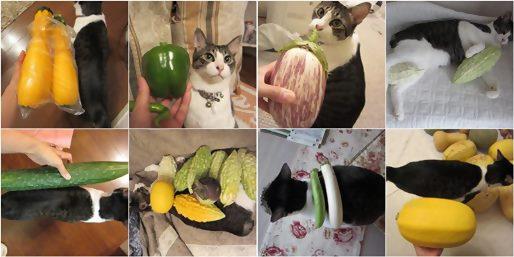 cats_20130910193213807.jpg