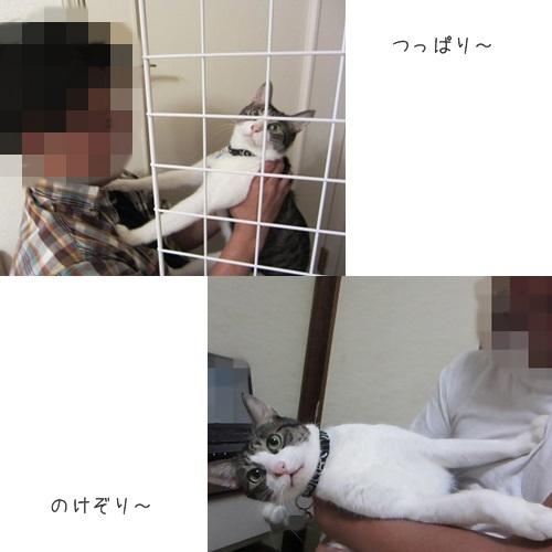 cats_20130915173734fa8.jpg