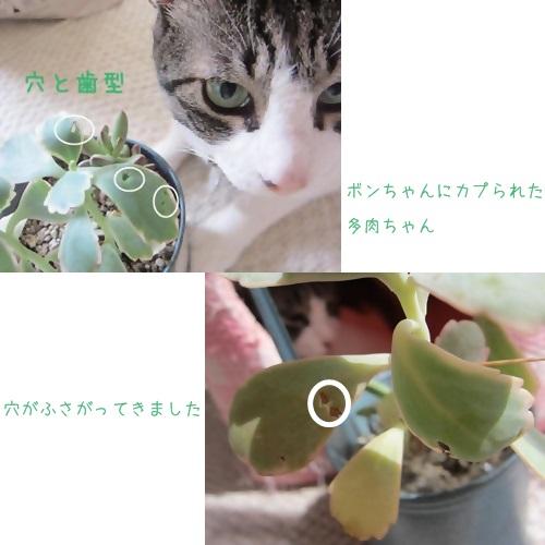 cats_20130918120938b5f.jpg