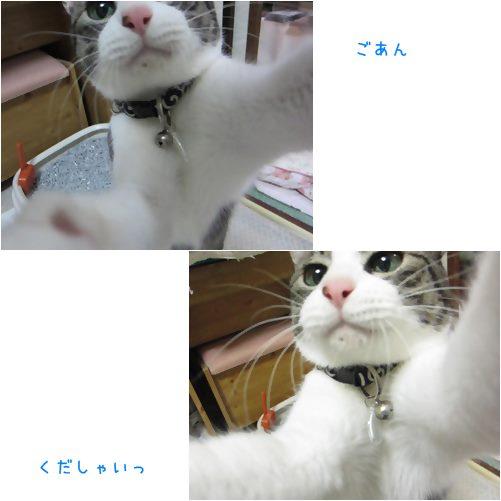 cats_201309281941438e8.jpg