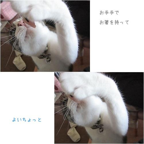 cats_20131002122209cda.jpg