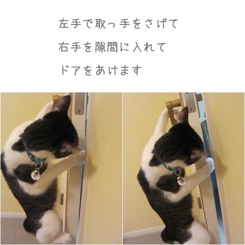 cats_20131002132315b5e.jpg