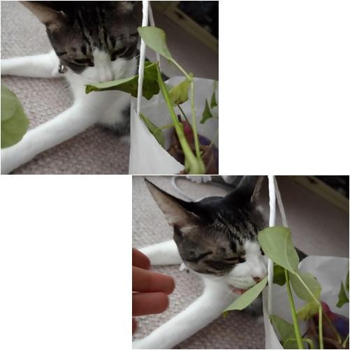 cats_201310041223132c3.jpg
