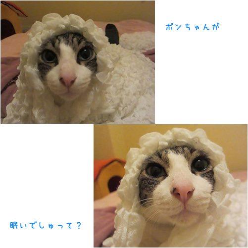 cats_20131011194231523.jpg