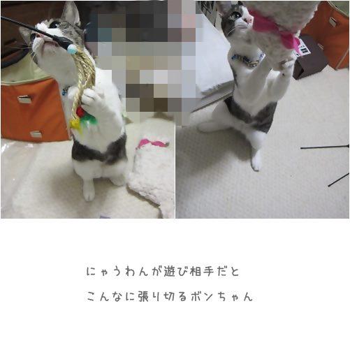 cats_20131012195152f20.jpg