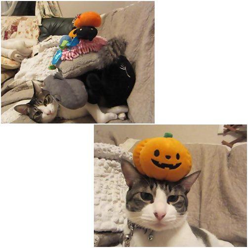cats_20131021151932b83.jpg