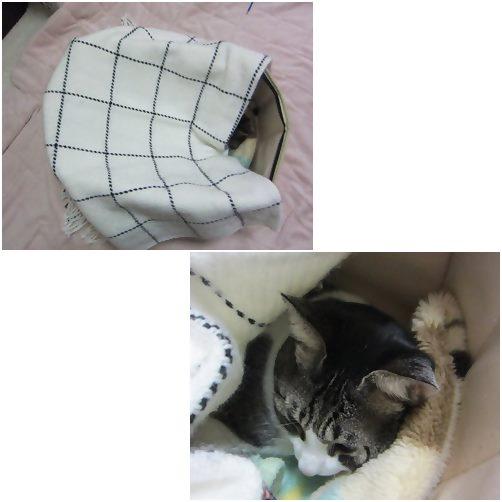 cats_2013102519315982d.jpg