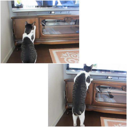 cats_201310261936020bb.jpg