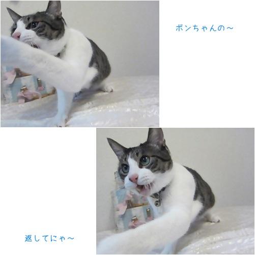 cats_20131127164320582.jpg