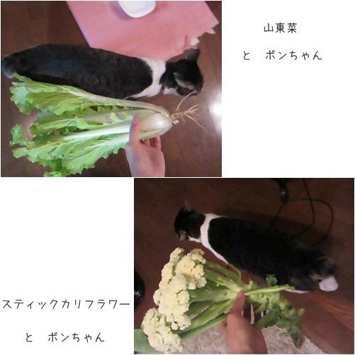 cats_20131129140934508.jpg