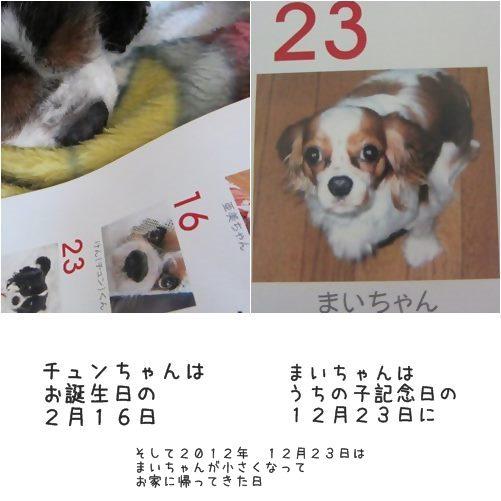 cats_20131201155903c0c.jpg