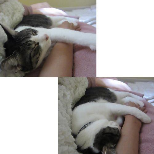 cats_20131204234356f91.jpg