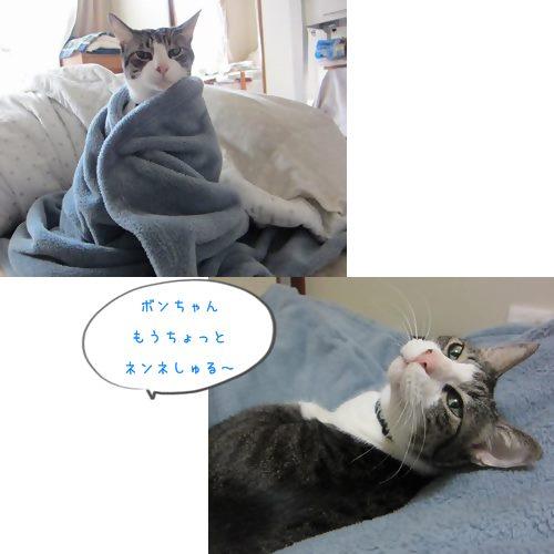 cats_20131206200442a0e.jpg