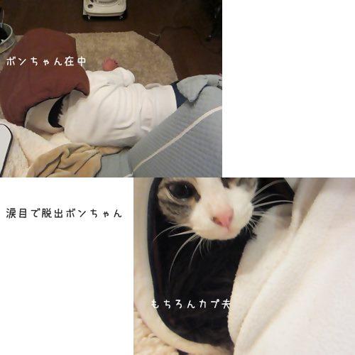cats_20131207191714472.jpg